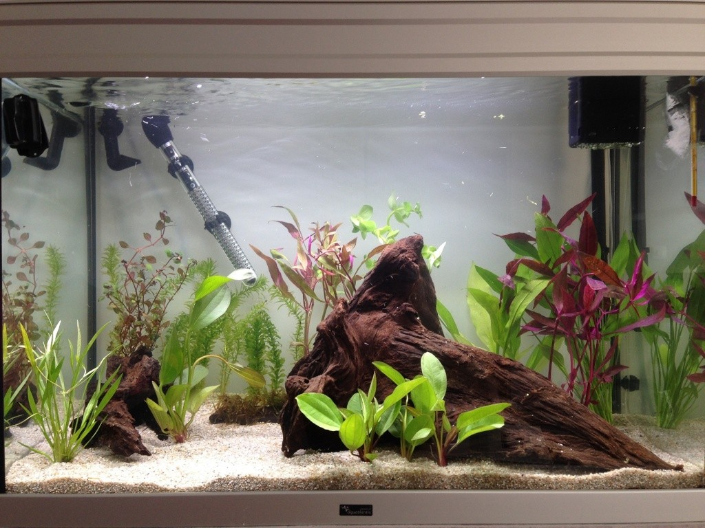 Lancement dans l'aquariophilie! NOUVELLES PHOTOS Page 3 Plante10