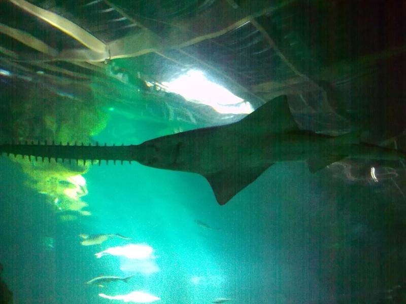Concours du lundi 14 décembre au dimanche 20 décembre Requin10