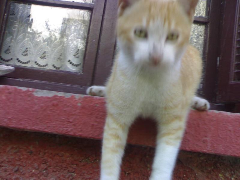 Les Chats d'Essouira 23012011