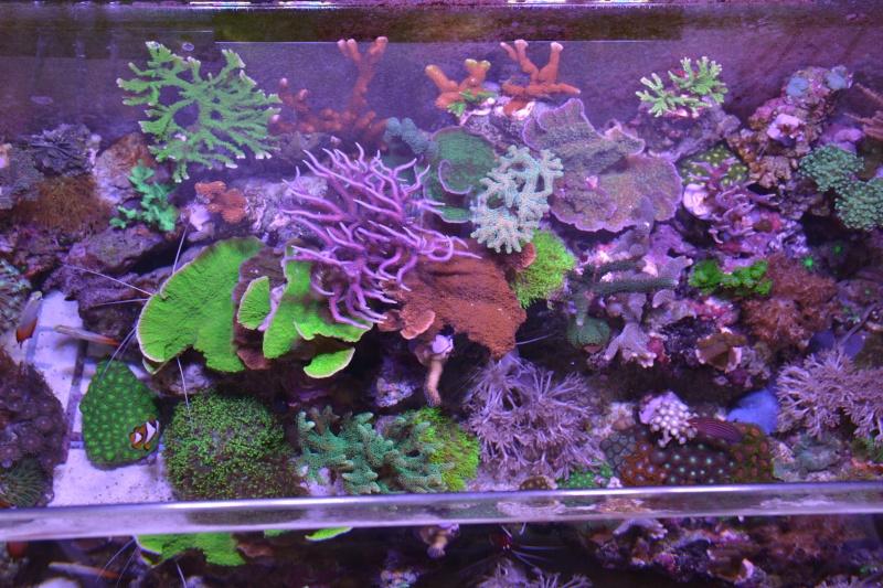 Mon premier aquarium eau de mer - Page 4 Dsc_2211