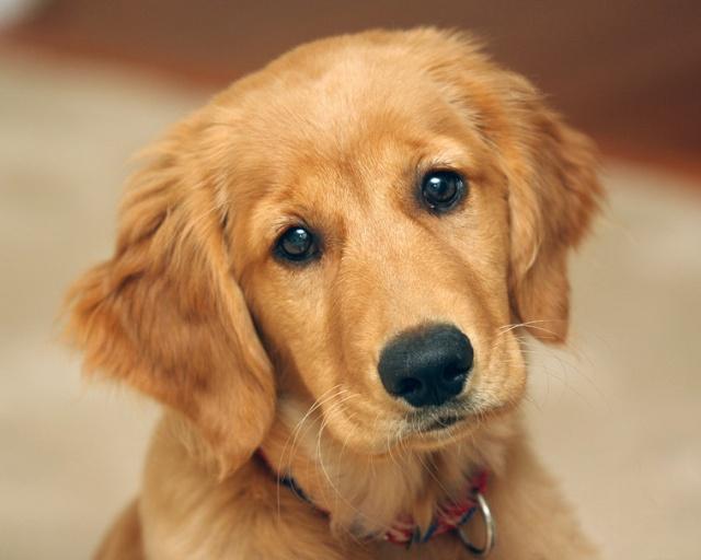 Les chiens de vos rêves en photos! 61906110