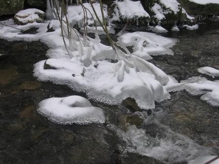 Votre photo pour Février 2010 Img_0013