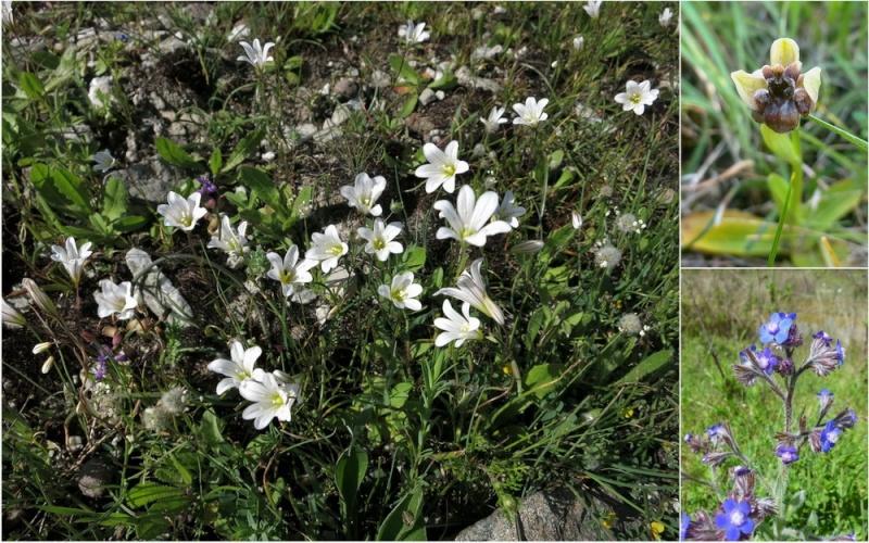 Rhodes printemps 2015 - Page 2 21_lac10
