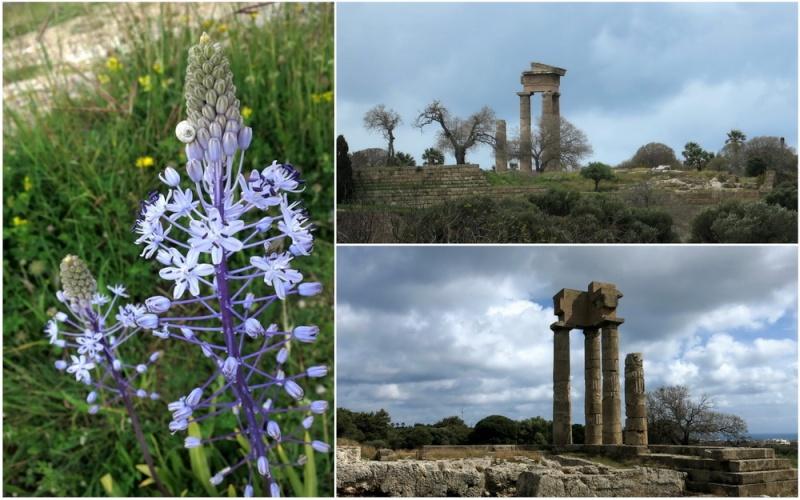 Rhodes printemps 2015 - Page 2 22_rho10