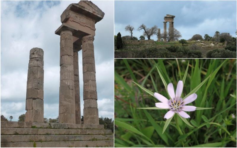 Rhodes printemps 2015 - Page 2 23_rho10