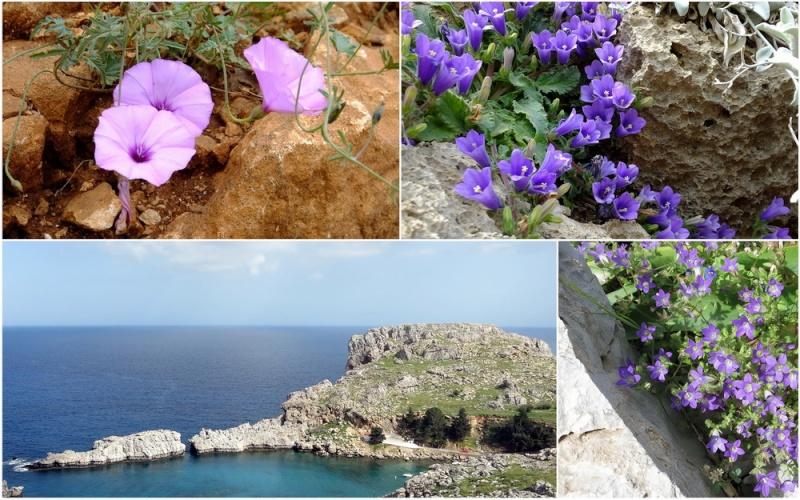 Rhodes printemps 2015 - Page 2 2_lind10