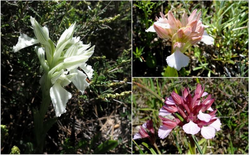 Rhodes printemps 2015 7_anac10