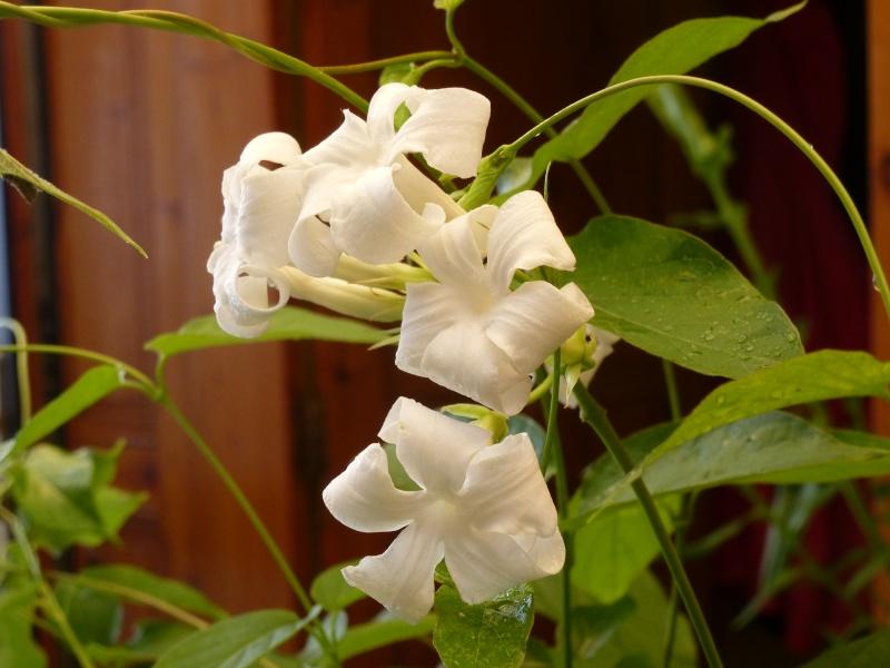 identifiacation de cette plante 03010