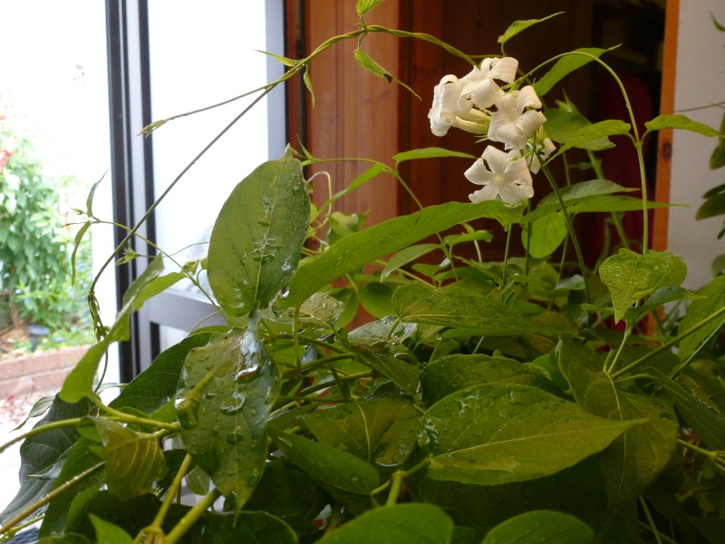 identifiacation de cette plante 03111