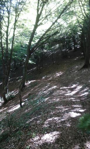 Armentia 13062015 Img-2012