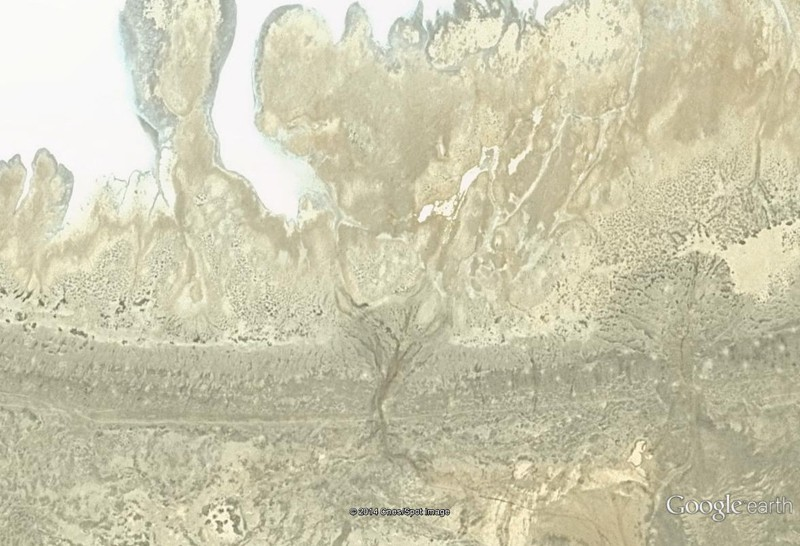 Van Gogh et Kurosawa [Image truquée de Google Earth]  Arbre_10