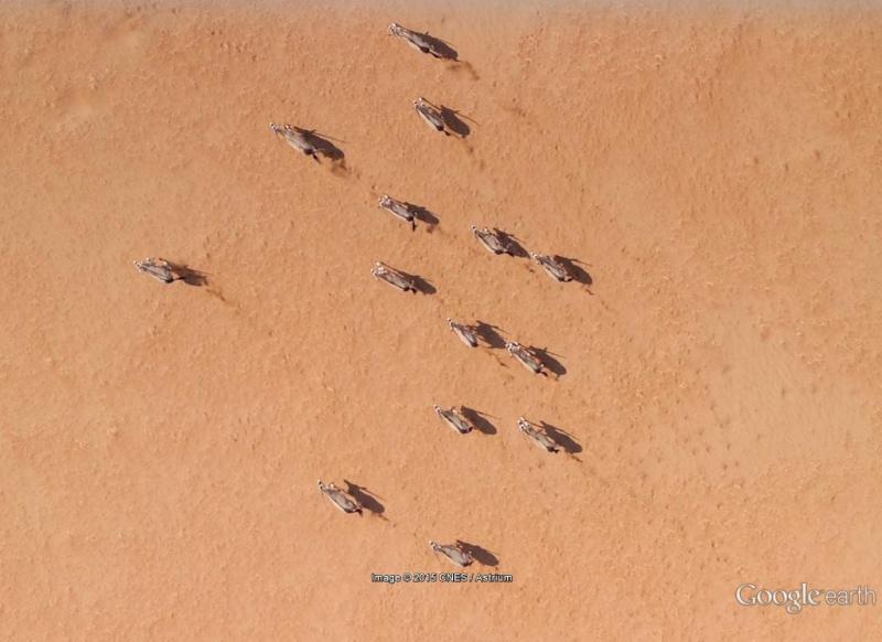 En Afrique avec le National Geographic Magazine - Page 2 Oryx10