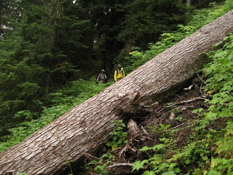 L'arc volcanique des Cascades (sujet participatif) Sentie10