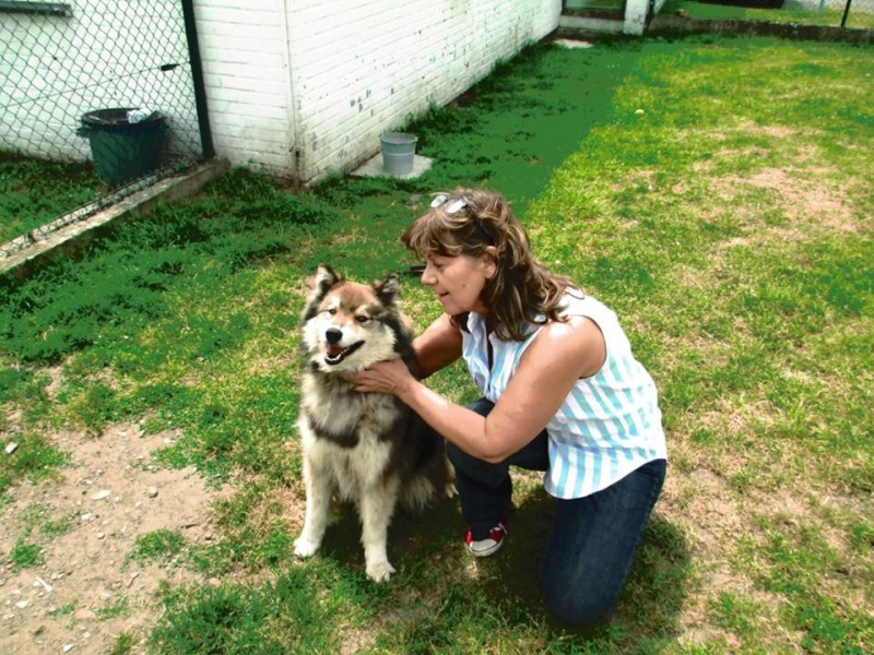 Luna x husky (f) 6 ans 8 mois REFU Belgique 10345510