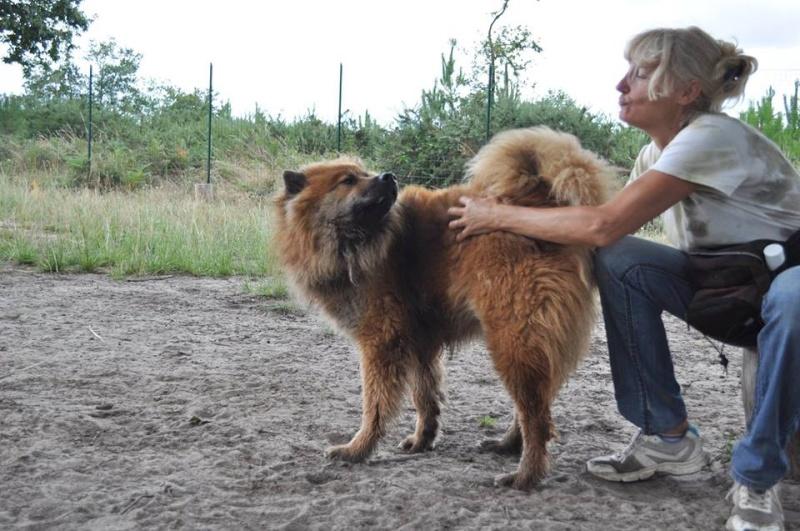 IPSO Eurasier (m) sociable avec les chiens 01/2013 REFU40 ADOPTER 11036610