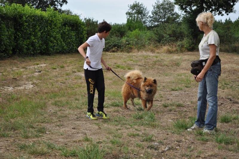 IPSO Eurasier (m) sociable avec les chiens 01/2013 REFU40 ADOPTER 11800210
