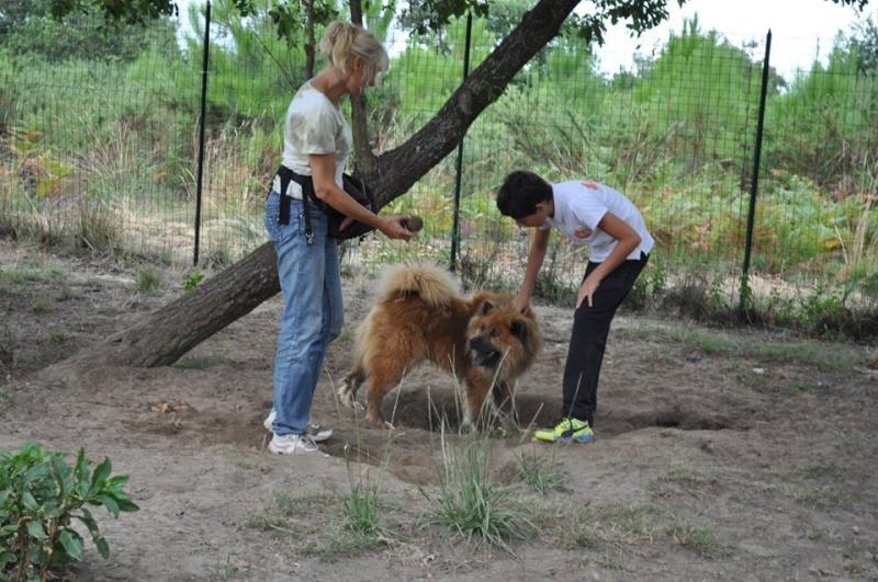 IPSO Eurasier (m) sociable avec les chiens 01/2013 REFU40 ADOPTER 11825910