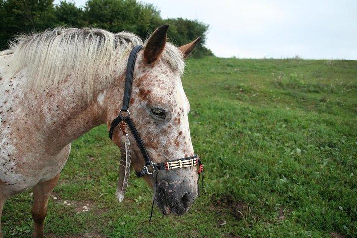 Le cheval toiletté 47508_10