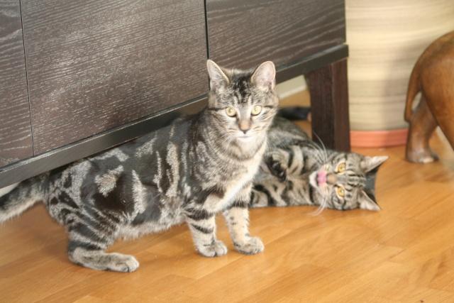 Simba et Peeter, petites boules d'amour... Peeter15