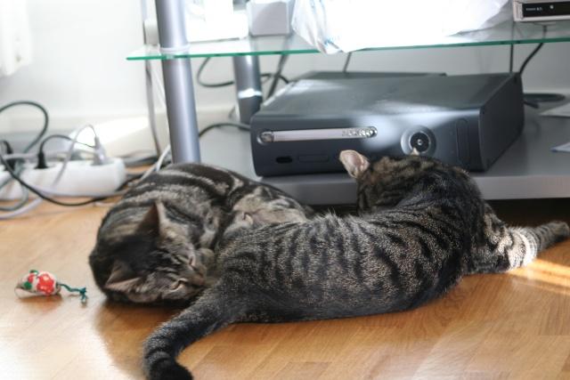 Simba et Peeter, petites boules d'amour... Peeter16
