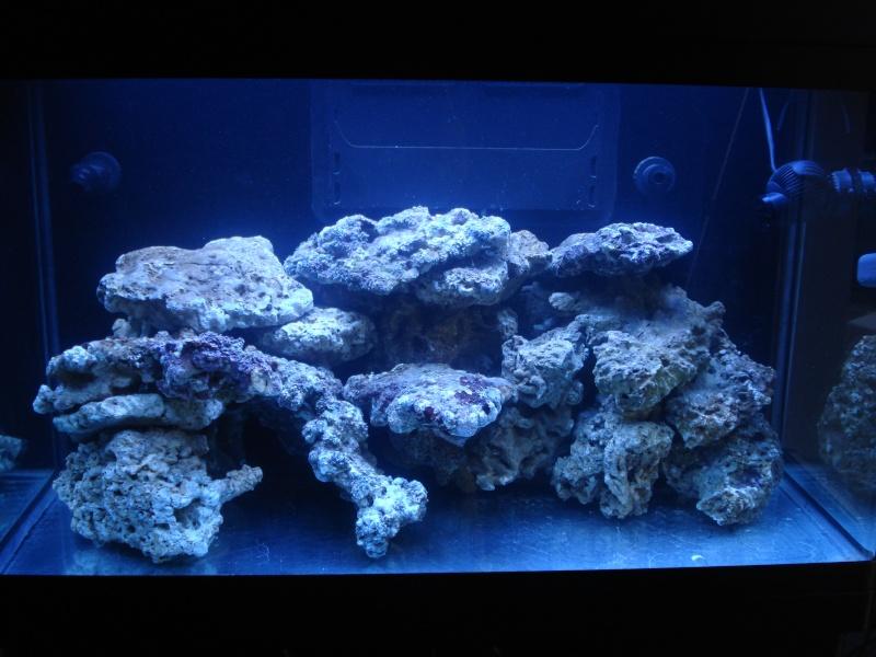demarrage de mon Red Sea Max 250 suivi quotidien Dsc04724