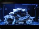 demarrage de mon Red Sea Max 250 suivi quotidien Dsc04716