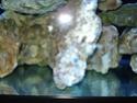 demarrage de mon Red Sea Max 250 suivi quotidien Dsc04718