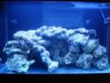 demarrage de mon Red Sea Max 250 suivi quotidien Dsc04719