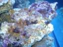 demarrage de mon Red Sea Max 250 suivi quotidien Dsc04722