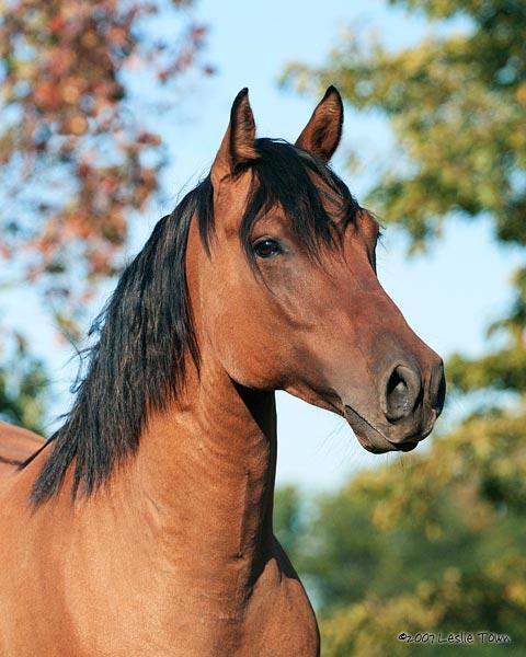 Le Quarter Horse. Photo_10