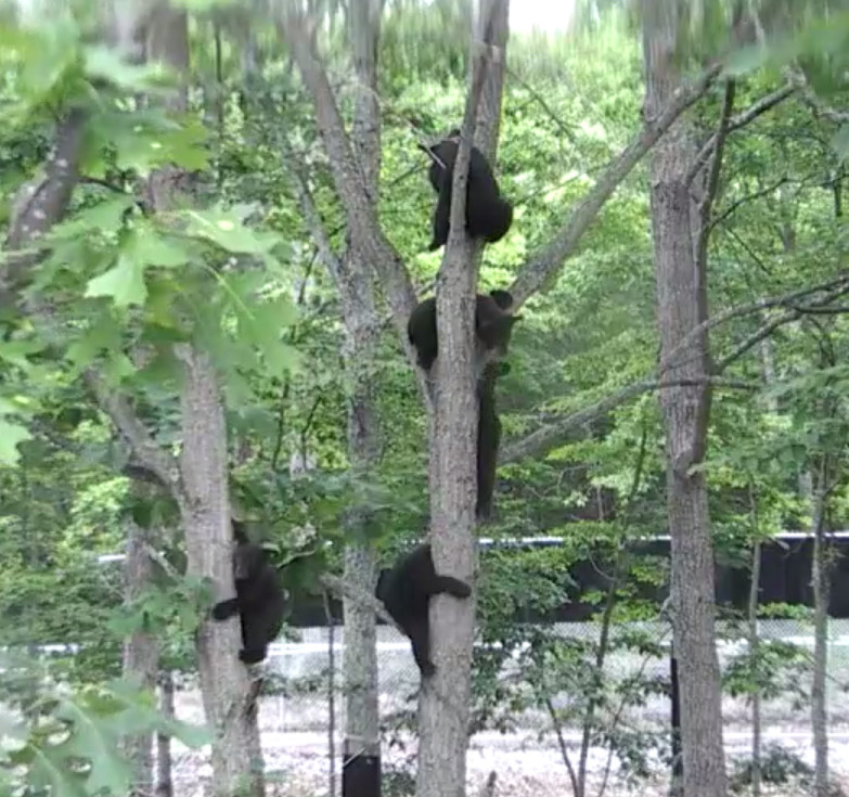 Wildlife Center of Virginia Webcams 2015-011