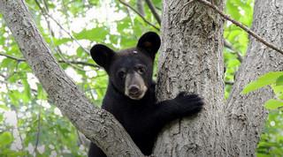 Wildlife Center of Virginia Webcams 2015-015