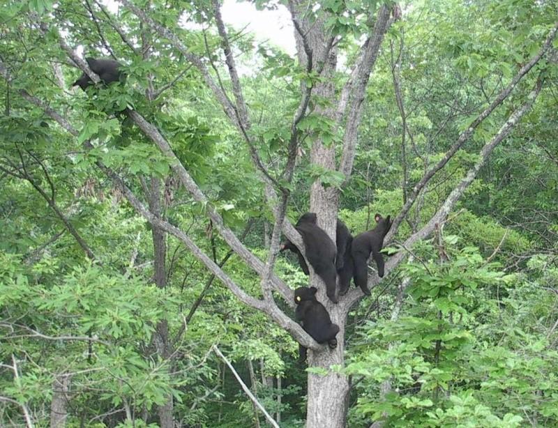 Wildlife Center of Virginia Webcams 2015-016
