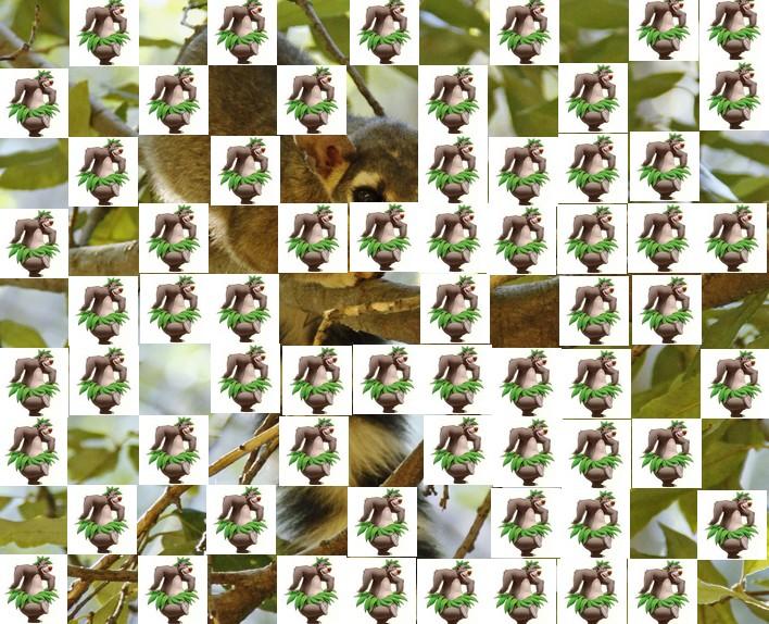 l'animal de Martin du 3 juillet trouvé par Snoopie - Page 2 Animal14