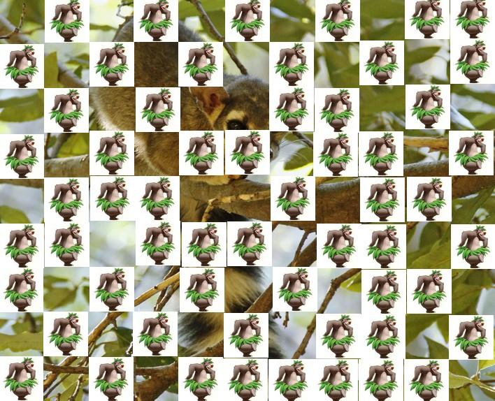 l'animal de Martin du 3 juillet trouvé par Snoopie - Page 2 Animal17