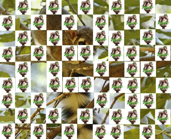l'animal de Martin du 3 juillet trouvé par Snoopie - Page 2 Animal18