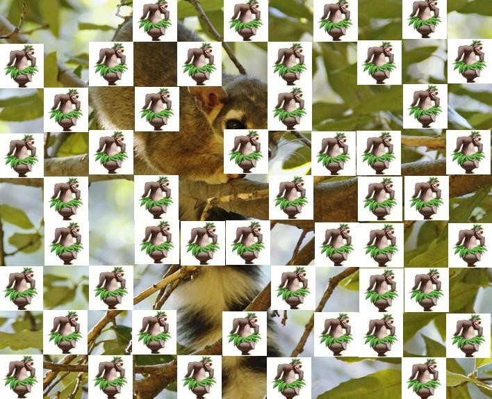 l'animal de Martin du 3 juillet trouvé par Snoopie - Page 4 Animal19