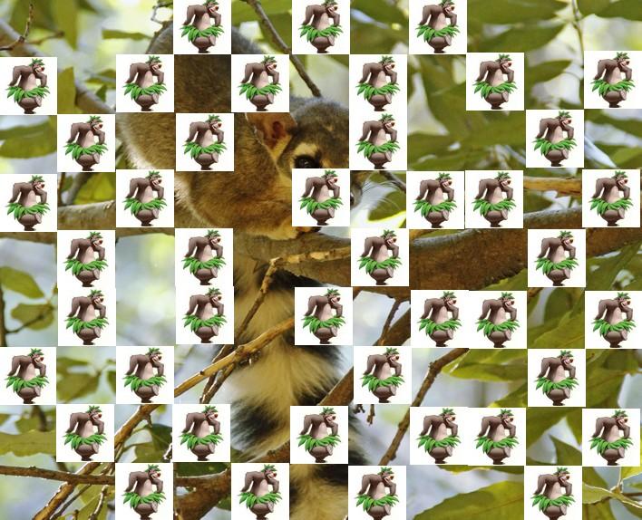 l'animal de Martin du 3 juillet trouvé par Snoopie - Page 4 Animal20
