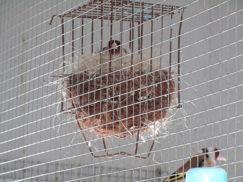 Contrôle des nids Emma-o19