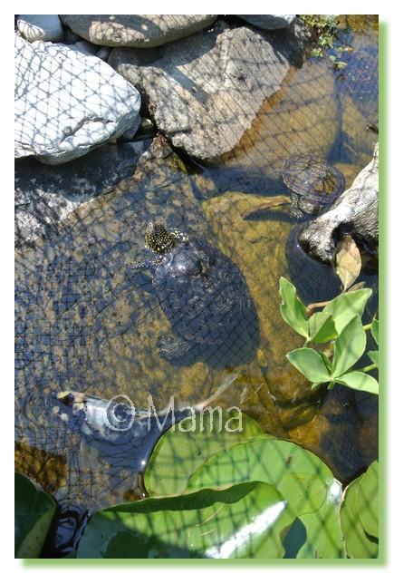 L'étang des cistudes 1 an après Ytang_14