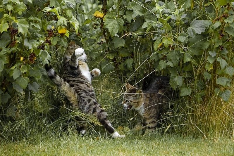 Katt-bildtråden! Dsc_3910