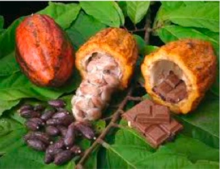 why is chocolate so good for you ? 87312210