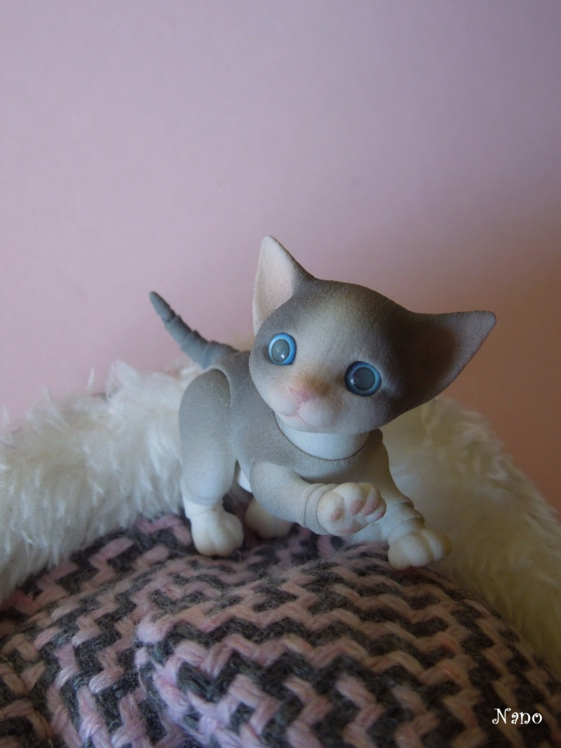 Ma petite famille de BJD (Souldoll, Fairyland, Raccoon doll) - Page 23 Dscn7811