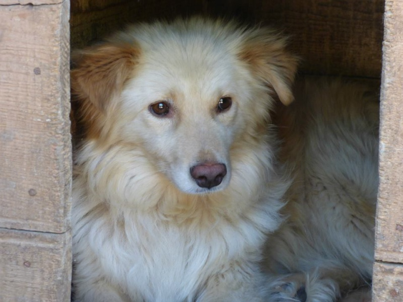 BILBAO, mâle croisé, taille petite à moyenne (Pascani) - adopté par Isabelle (Belgique) - Page 2 10429410