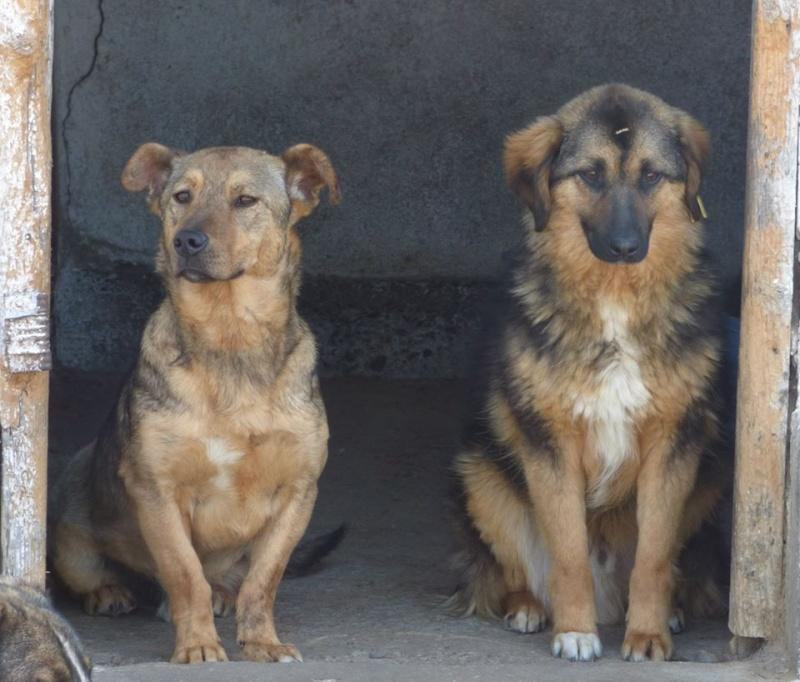 BOWH - mâle croisé, de petite  taille, né env 2012  (PASCANI) - adopté par Magali et François-Xavier (68) 10525510