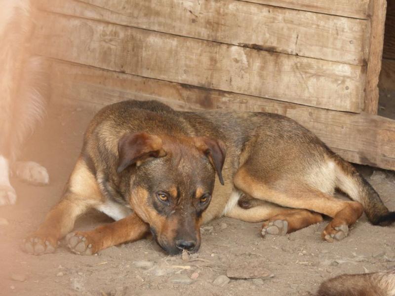 OSCAR - mâle, né environ avril 2012, taille moyenne - En FA chez DarkKing (42) replacé en FA chez Sylvie (02)  10616010