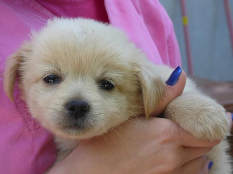 DONUT, chiot mâle, né en mai 2015 (Pascani) - en pension chez Lucian reservé FA audrey55 11011410