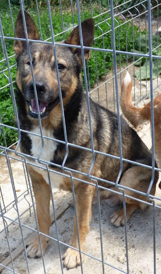 florin - ALEX - mâle croisé taille moyenne, Borgne (PASCANI) - adopté par Coco27 (Belgique) 11061210