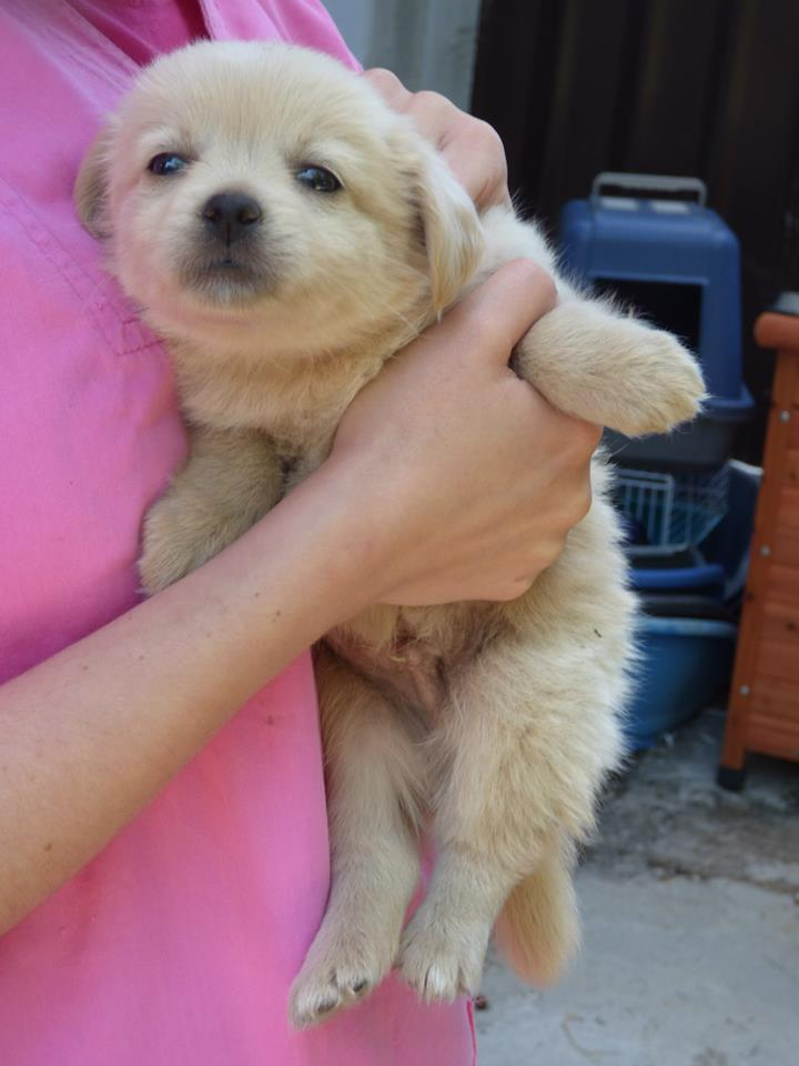 DONUT, chiot mâle, né en mai 2015 (Pascani) - en pension chez Lucian reservé FA audrey55 11140310