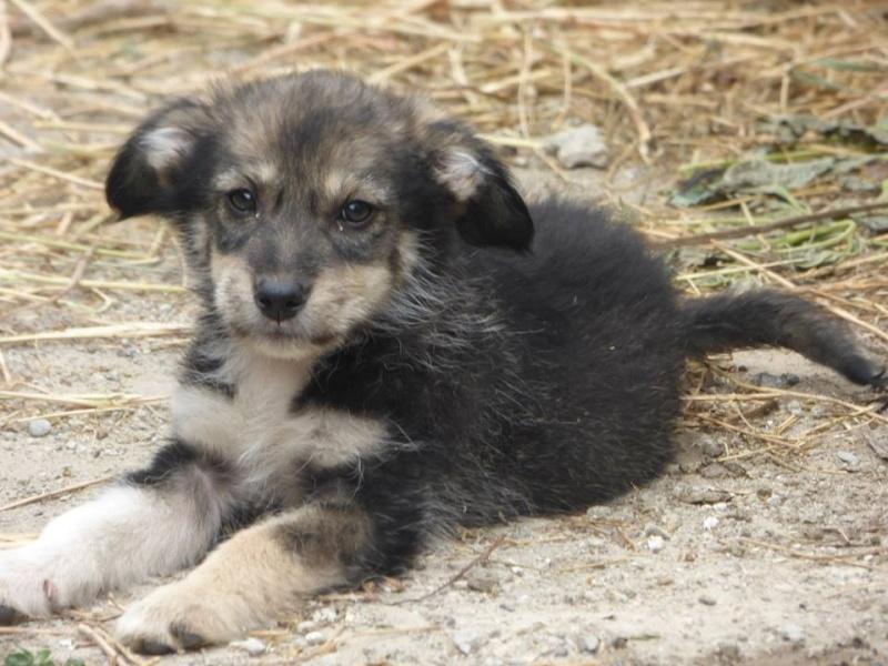 Lucian - CHEROKEE chiot femelle née en mars 2015 taille moyenne, croisée -en pension chez Lucian - adoptée par Sabrina (dpt77) 11178210